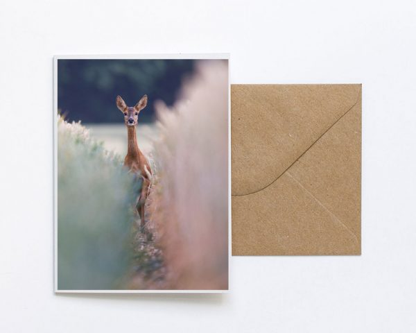 Startled Deer Sustainable Greeting Card