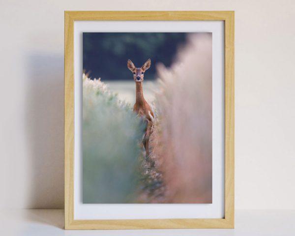 Startled Deer Photo in Frame