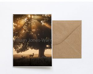 Deer at Dusk Greeting Card