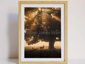 Deer at Dusk Sustainable Greeting Card 2020/21