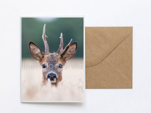 Stag Face Sustainable Greeting Card 2020/21