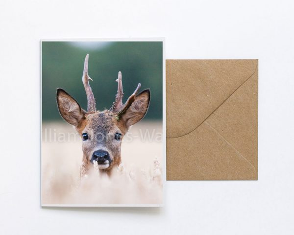 Stag Face Greeting Card