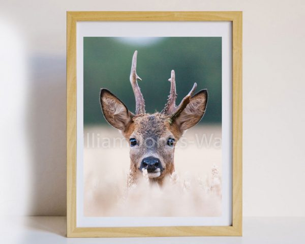 Stag Face Wall Art framed
