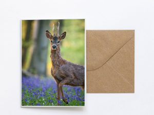 Woodland Stag Sustainable Greeting Card 2020/21