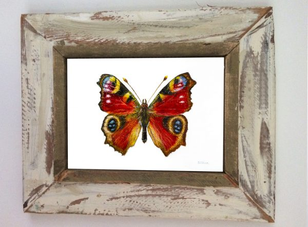 Butterfly Greeting Card Art by Sue Ennion