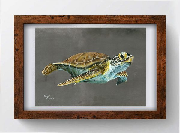 Turtle Greeting Card Art by Sue Ennion